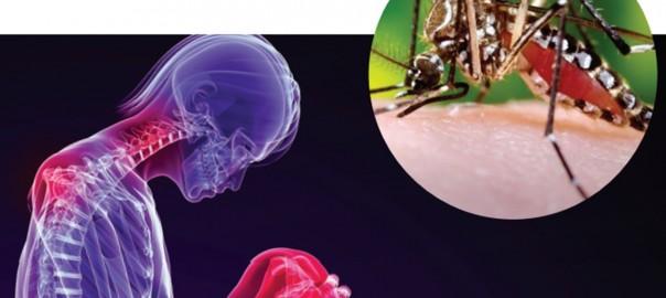 Éramos muchos y parió la abuela: el virus chikungunya surge en América