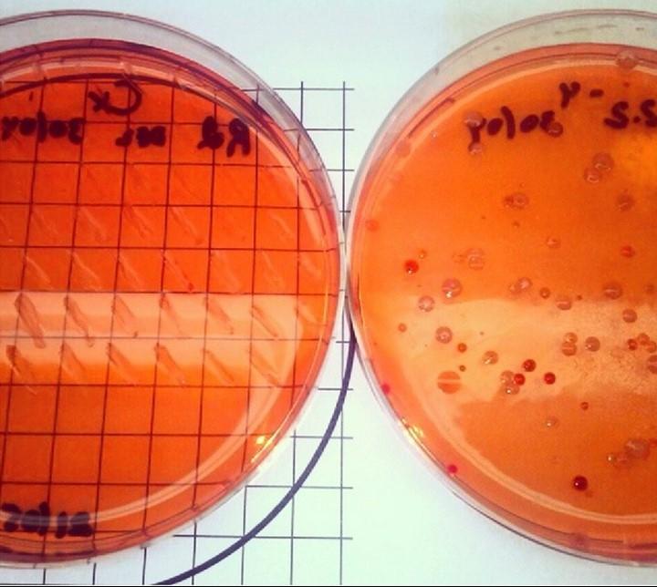 endofitas felix moronta