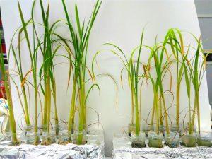 bacteria agriculture felix moronta