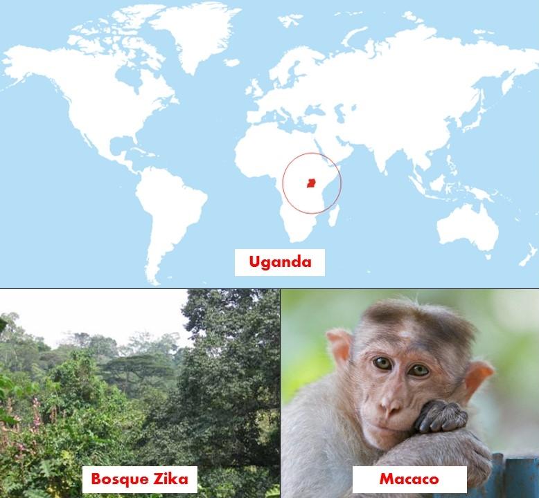 uganda macaco zika felix moronta