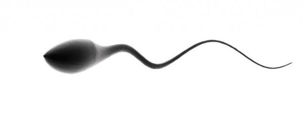 El semen controla los genes y el comportamiento femenino