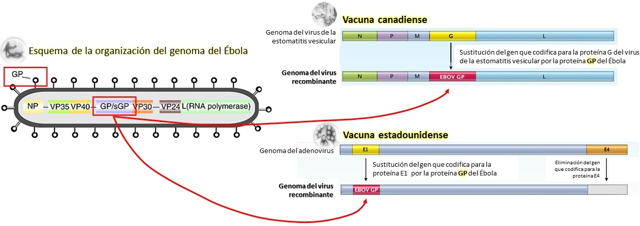 Vacuna Ebola