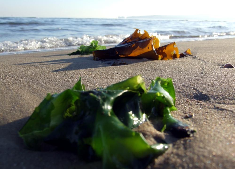 Algas rojas (fotografía de http://www.flickr.com/photos/8172450@N04/)