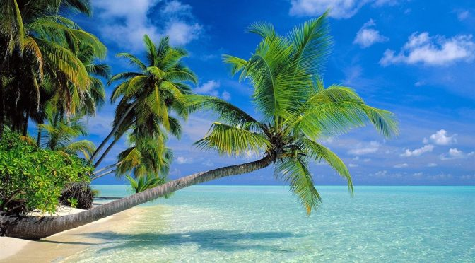 Sin cocos no hay paraíso