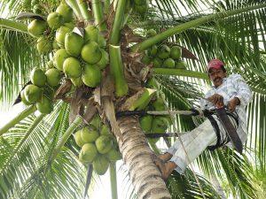 cocos 2 felix moronta