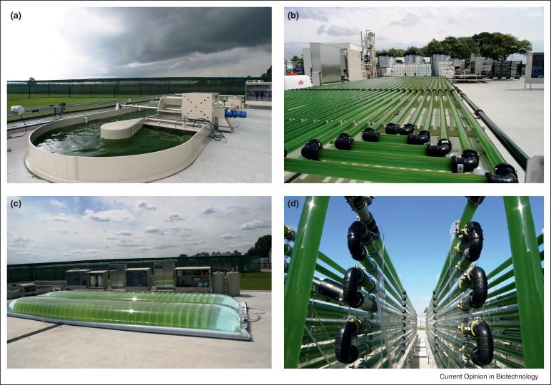 Formas de cultivo industrial de cianobacterias. Piscinas y fotobiorreactores.