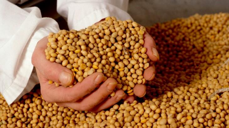 ley de semillas felix moronta